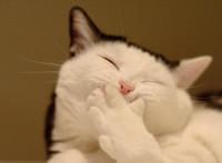 この画像は、サイトの記事「木曜JUNK おぎやはぎのメガネびいき放送 2015年10月 YouTubeまとめ! ギャグ炸裂 お笑い無料!」のイメージ写真画像として利用しています。